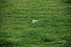 Sky-Gliderz-in-Grass